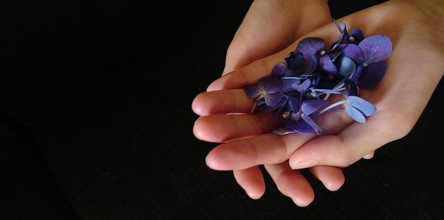 ruce, fialové květy