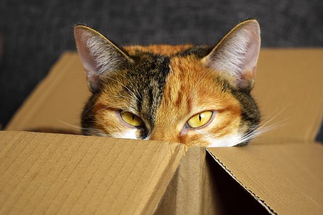 kočka v krabici