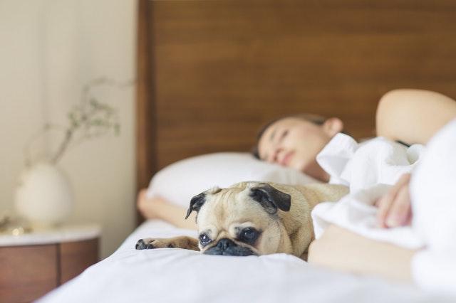 spící žena a pes