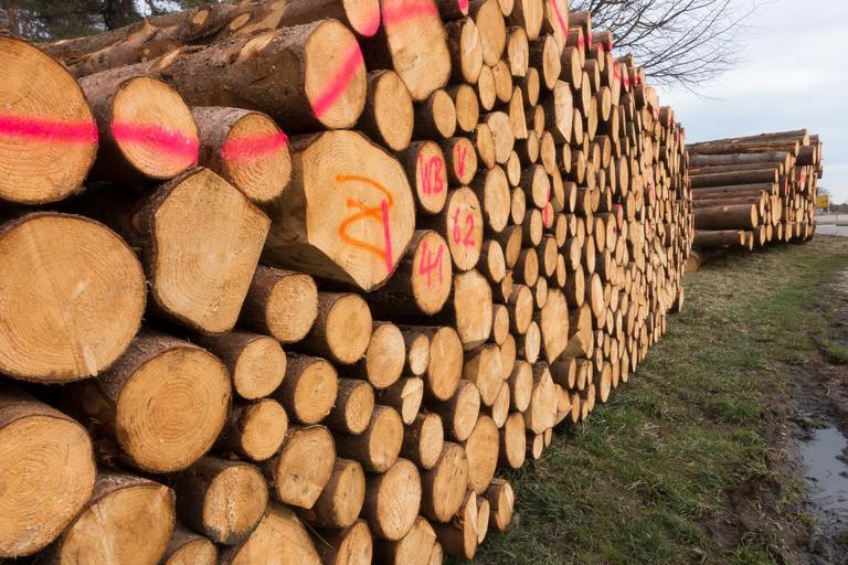 Dřevo na hranoly
