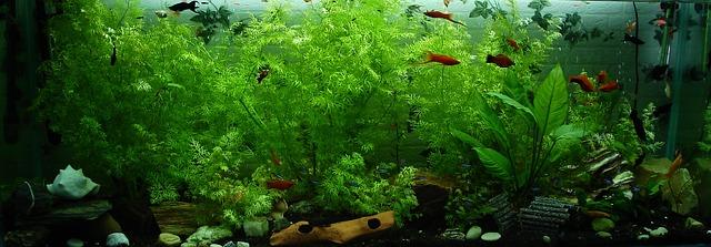 Krásně zařízené akvárium.jpg